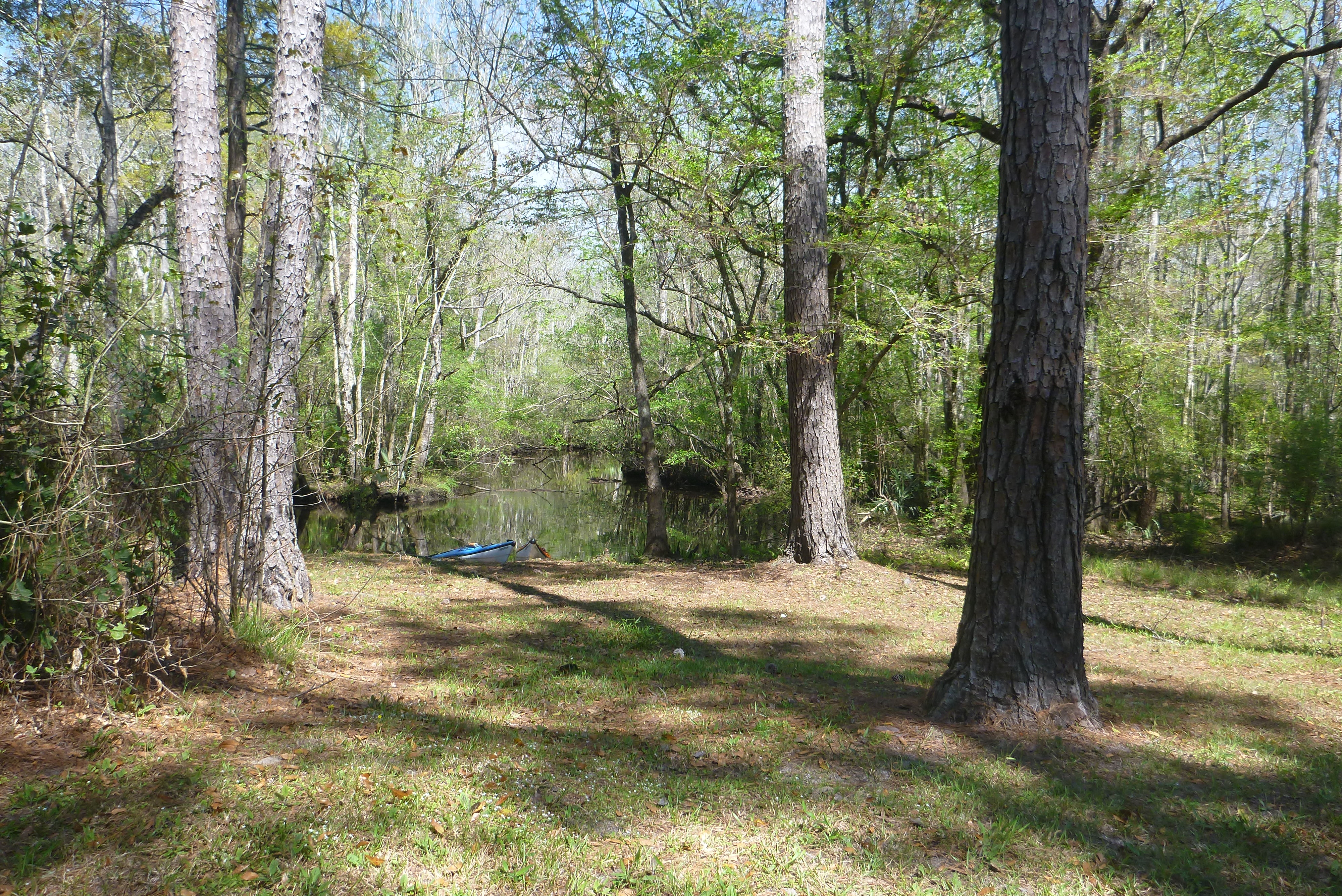 Camping | Tate's Hell and Blackwater River State Forests